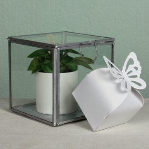 doosje-vlinder-wit-parelmoer