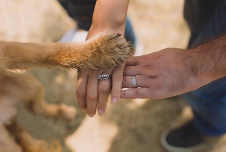 bruiloft-decoratie-huisdieren-op-je-bruiloft (1)
