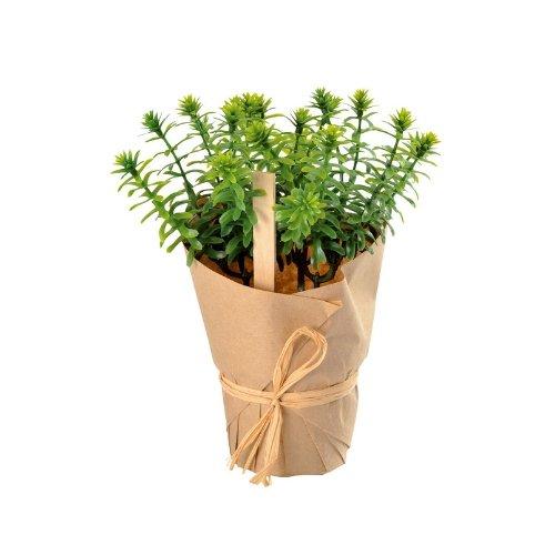 bruiloft-decoratie-nep-plantje-rozemarijn